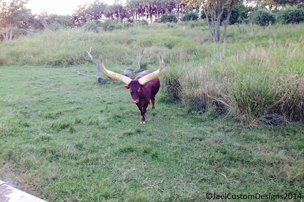 Disney Animal Kingdom Watusi